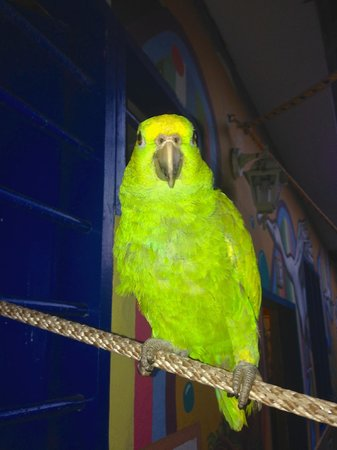 Hostel Mamallena: Pet bird