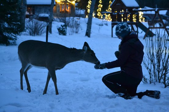 Gunflint Lodge & Outfitters: Eating out of our hands.