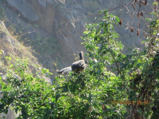 Las Brisas Huatulco : Bird in a tree on hte resort- beautiful grounds