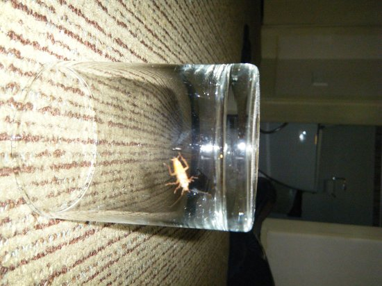 Urbana Sathorn: Roach Under Glass Which WAS ON ME IN MY BED !!!