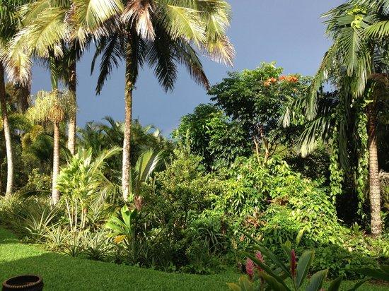 Lava Tree Tropic Inn : Breakfast view - Mauna Kea seen when good visibility