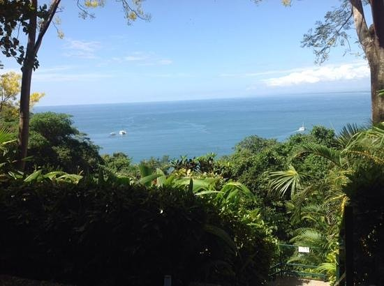 Makanda by the Sea : view from our studio! just amazing!