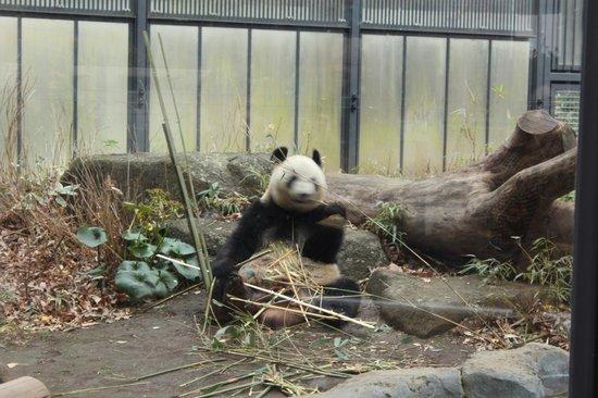 Ueno Zoo: Panda!!!!!!!!!!!!!!!!!!!!!