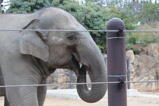 Ueno Zoo: elefante