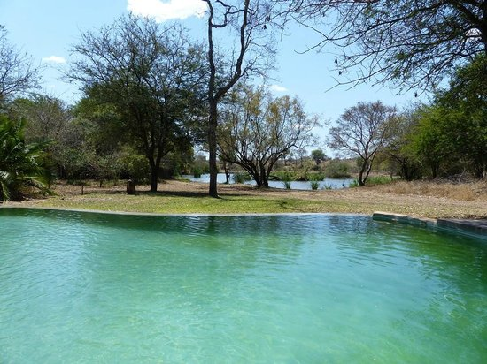 Tanda Tula Safari Camp: Piscina y enfrente el abrevadero en el que beben animales