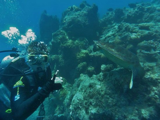 Ocean Spirit Cruises: Joey's Introductory Dive on the GBR