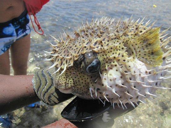 Jacaranda Beach Resort: pesci davanti al jacaranda