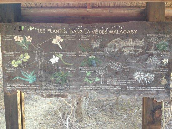 Arboretum d'Antsokay : Information board on plants in Malagasy life