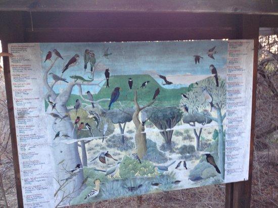 Arboretum d'Antsokay : Information board on local birds
