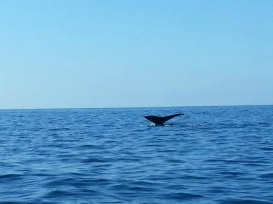 Adventure Divers : Humpback whale