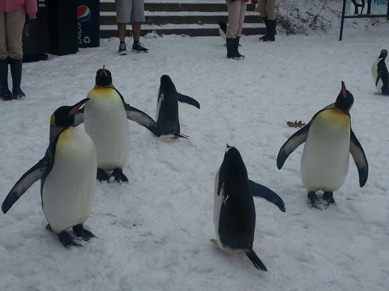 Pittsburgh Zoo & PPG Aquarium: Penguin playgroup.