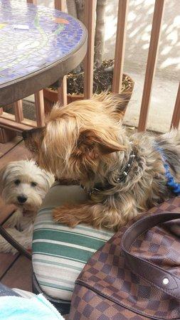La Serenata Gourmet: Doggie friendly brunch spot. Love it :).