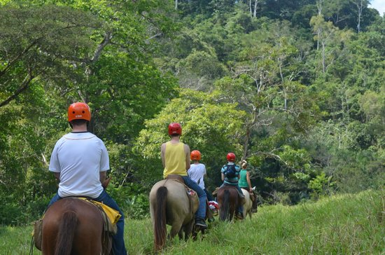 Discovery Horseback Tours: Heading into the Rain Forest