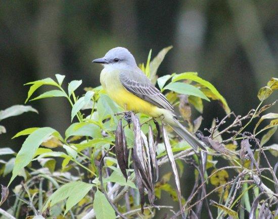 Volcano Lodge & Springs: birdwatching