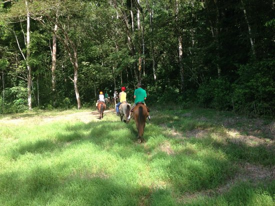 Discovery Horseback Tours: Heading in the air conditioner