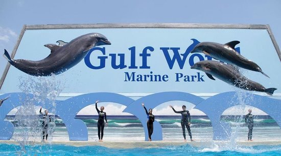 ‪Gulf World Marine Park‬