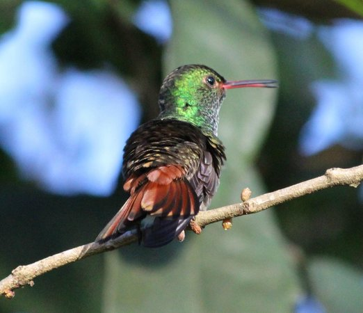 Volcano Lodge & Springs: birdwatching