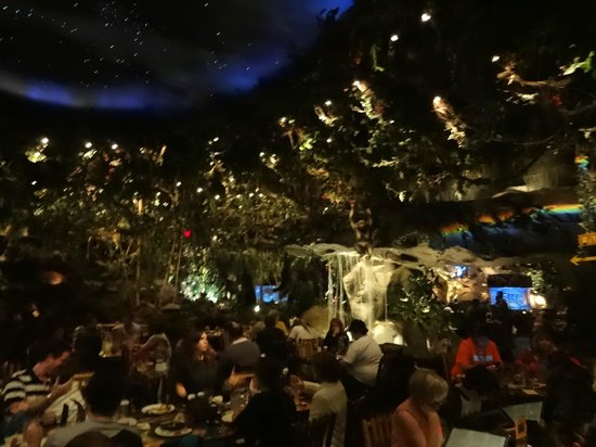 Rainforest Cafe - Disney Animal Kingdom : Inside
