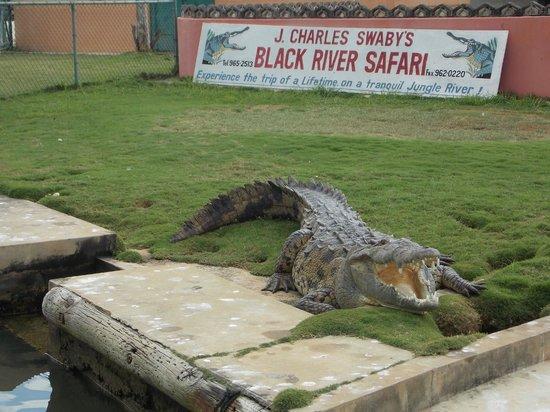 Everald's Jamaica Private Day Tours: black river safari