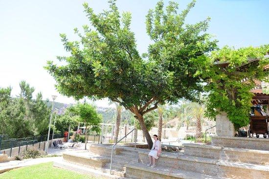 Hotel Yehuda: the garden