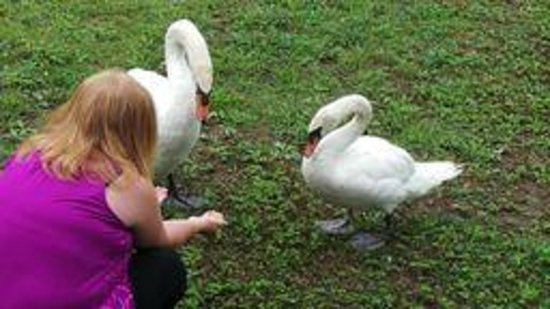Serenity Springs: love feeding all the water fowl