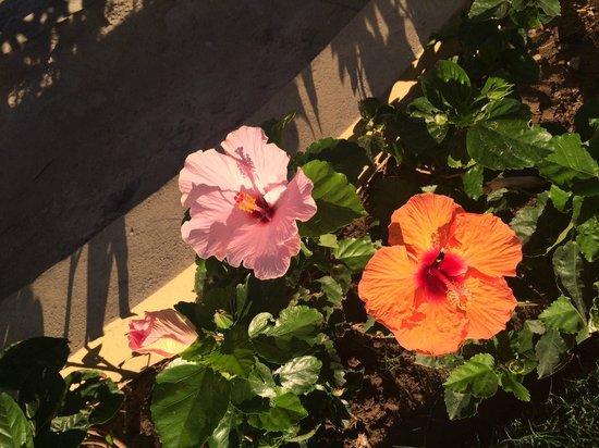 Marival Resort & Suites: Beautiful Flowers Around the Resort