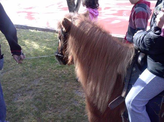 Casas Rurales La Caraba: el pony pedrin