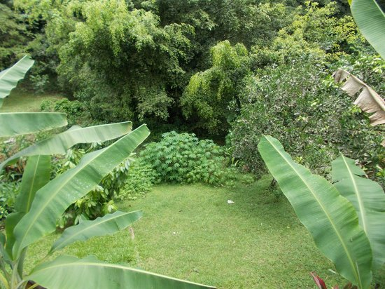 Adventure Eco Villas : Another view from the balconey