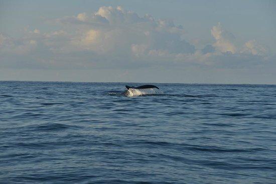 Finca Maresia : Buckelwal Fahrt zum Corcovado National Park
