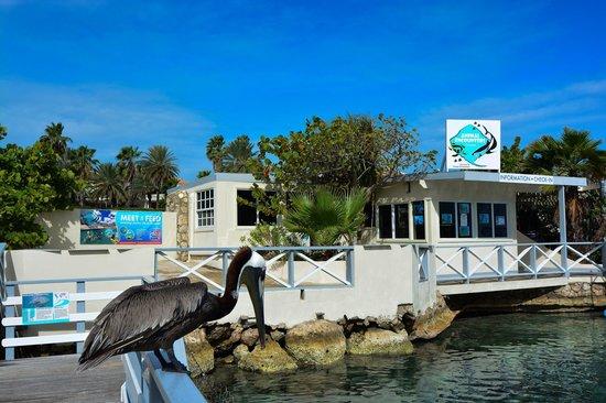 The Royal Sea Aquarium Resort: Part of the sea aquarium