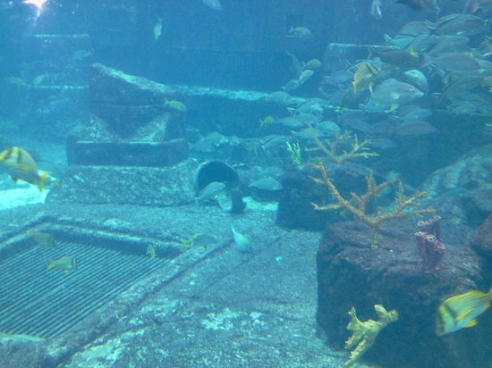 Marine Habitat at Atlantis: more artifacts
