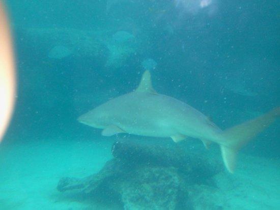 Marine Habitat at Atlantis: interesting