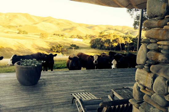 Greenhill Lodge: Cows at the back porch
