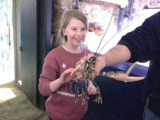 Lyme Regis Marine Aquarium : Meeting a lobster