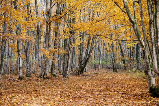 Pictured Rocks National Lakeshore: Fall colors