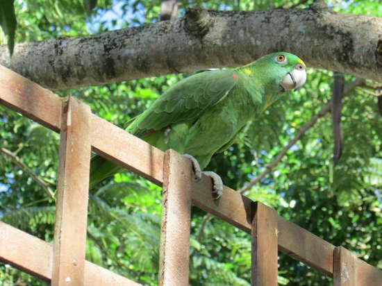 West Bay Lodge and Spa: Friendly Resident Parrot