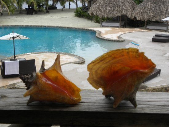 Captain Morgan's Retreat : conch shells we caught