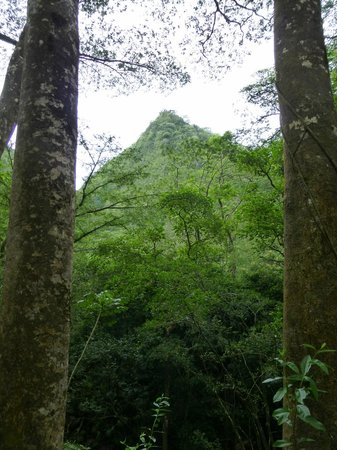 Manoa Falls: On the way to the falls...
