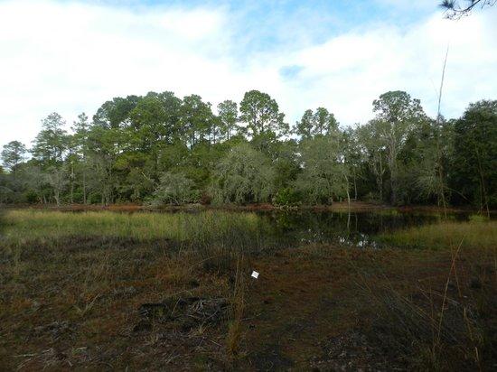 Jacksonville Arboreteum & Gardens : Jacksonville Arboreteum