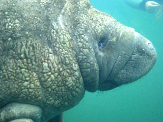 Best Manatee Tours In Florida Reviews