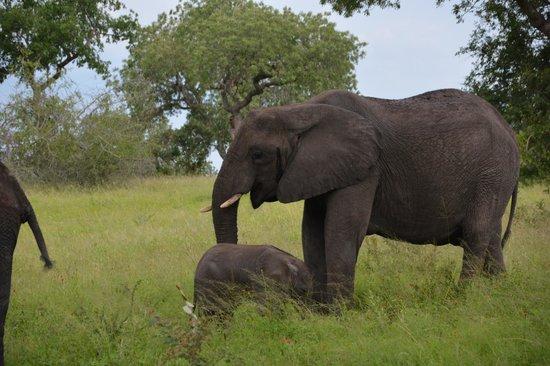 Londolozi Private Game Reserve: Londolozi Game Reserve, South Africa