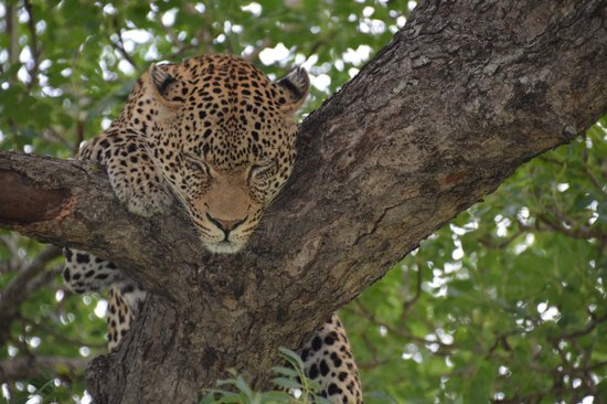 Londolozi Private Game Reserve : Londolozi Game Reserve, South Africa
