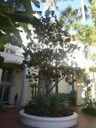 Park Hyatt Aviara Resort: relaxing walks through the courtyards