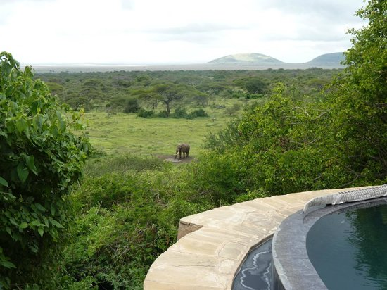 Great Plains Conservation ol Donyo Lodge : View of the wild elephant at the watering hole from our room