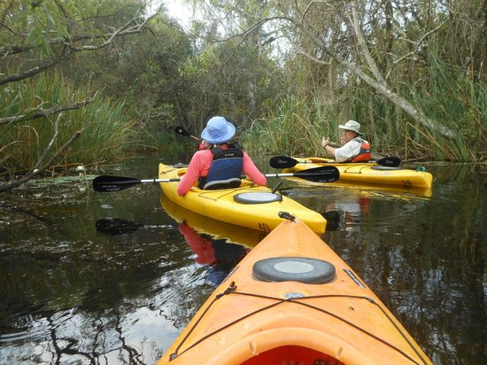 Everglades Rentals & Eco Adventures: learning along the way from John, our guide
