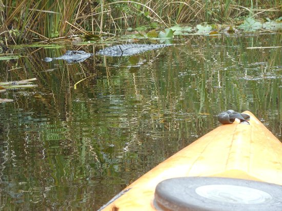 Everglades Rentals & Eco Adventures: another one