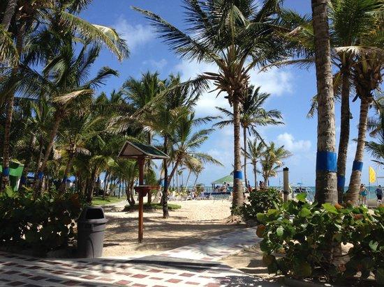 Decameron Marazul : Playa