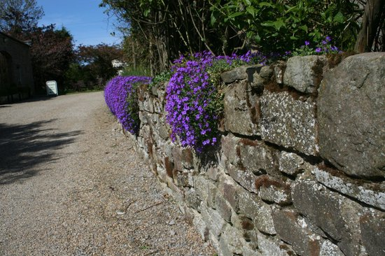 Cold Cotes Guest Accommodation & Gardens: drive into property