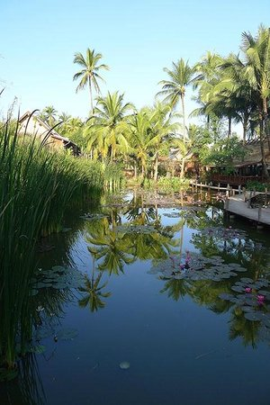 Maison Dalabua Hotel: The focal point of the hotel is this wonderful reed and lotus pond