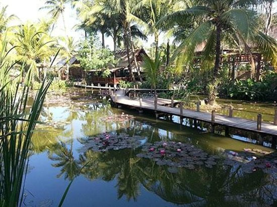 Maison Dalabua Hotel : The focal point of the hotel is this wonderful reed and lotus pond